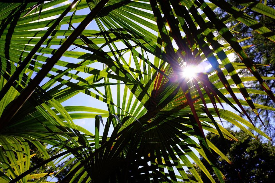 Palmeras al sol