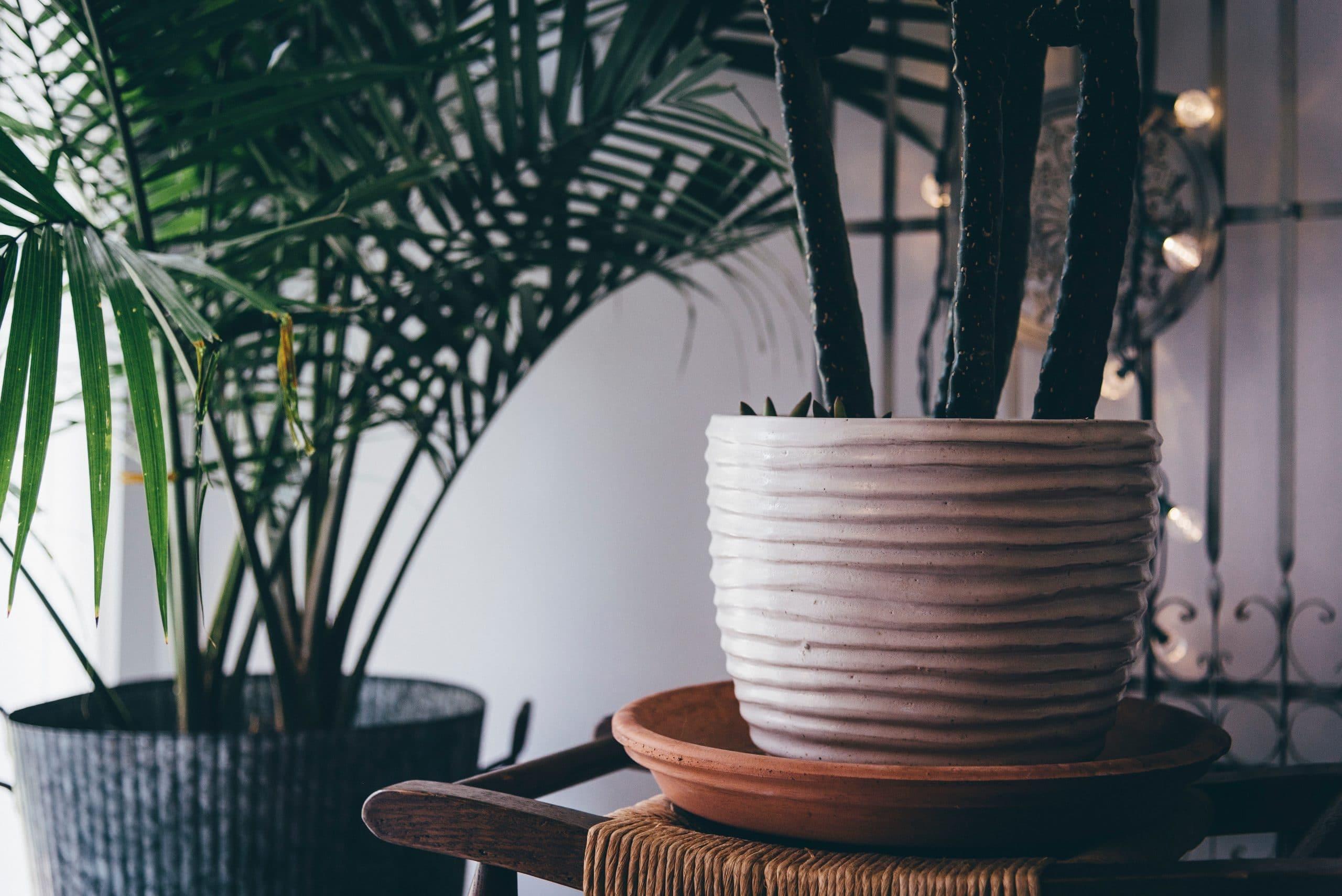 Plantas en interior