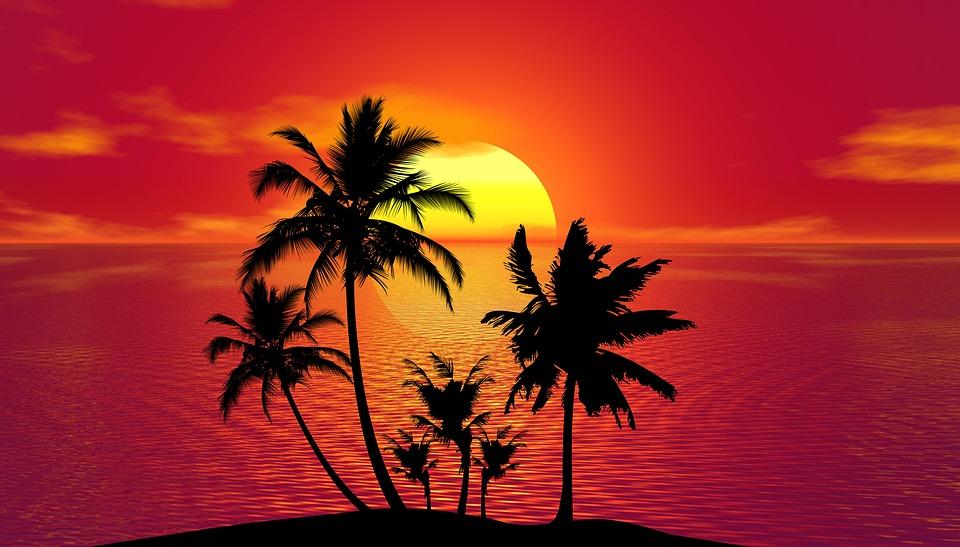 Cocoteros en una playa tropical