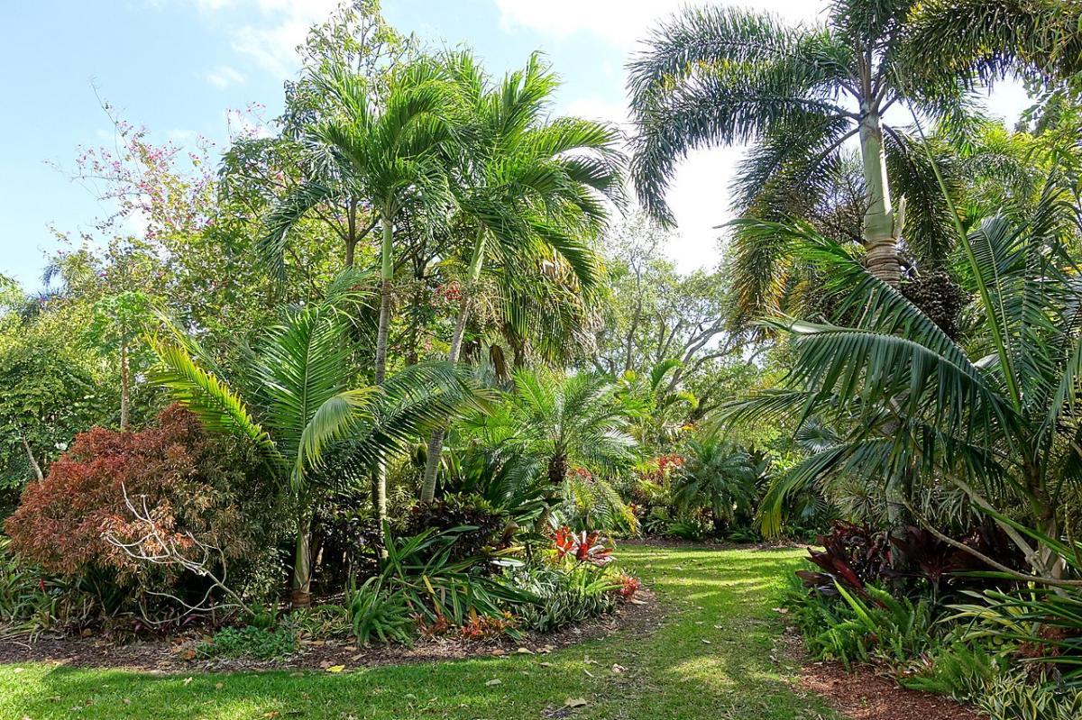 Las palmeras en un jardín necesitan una serie de cuidados